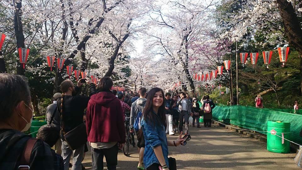 fioritura fiori di ciliegio tokyo