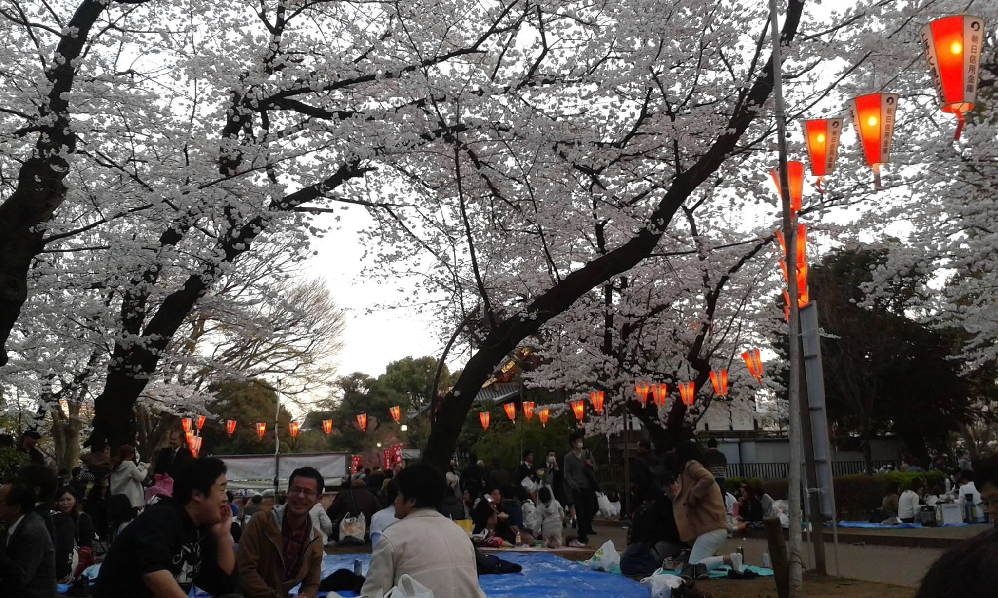 Fioritura fiori di ciliegio a Tokyo