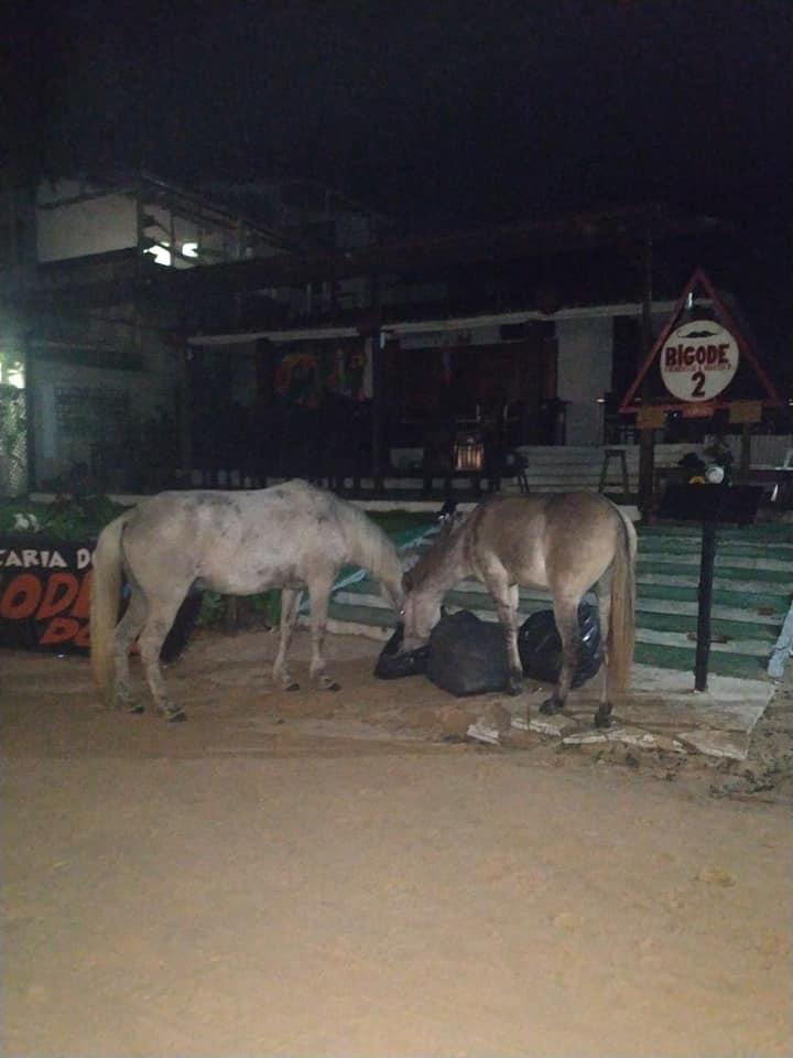 asino e cavallo Jeri