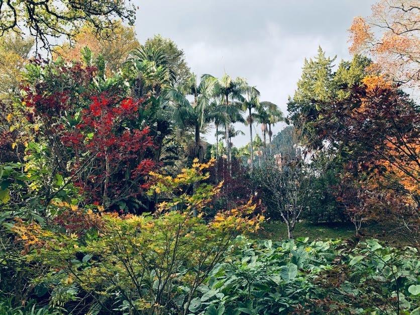 il giardino del Parco Terra Nostra (Sao Miguel Azorre)